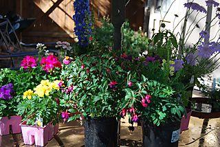 Blog Flowers Moana
