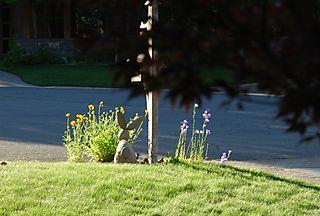 Blog Flower Bunny