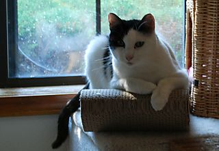 Blog Linus in Chaise