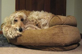 Lucy in bed Jan 09