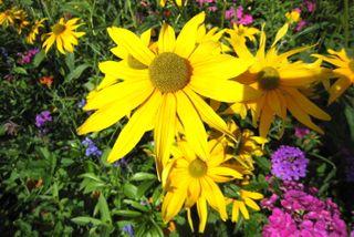 Bldr Flower 5 809.JPG