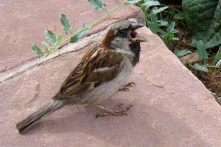 Boulder Bird 809.JPG