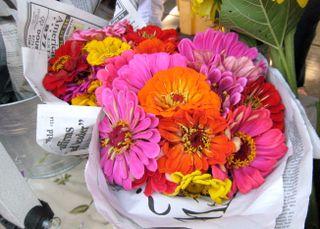 Bldr flower 2 809.JPG