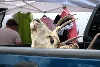 Sac antique 9-9 deer.JPG