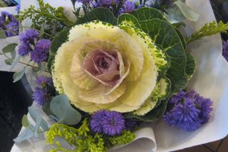 JF09 cabbage Rose.JPG