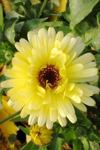 JF09 Flower.JPG