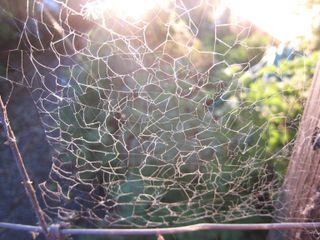 Mendo spider web.JPG