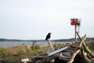 AF10 Black crow Pic.JPG