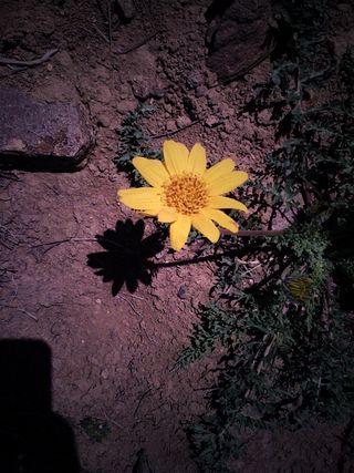 Wild flower april 2010.JPG