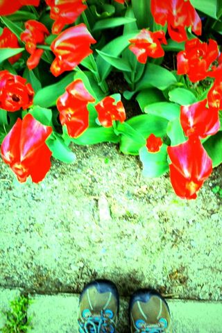 Artfest 11 tulips