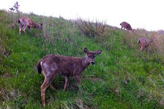 Artfest 11 Deer