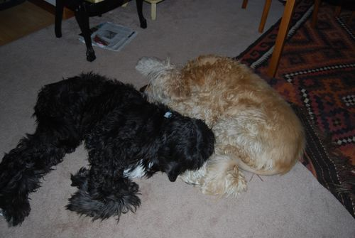 Puzzle and lucy